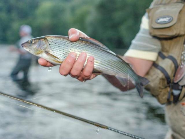 Pêche à La Mouche Ombre